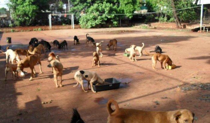 Ajuda Para o Abrigo da Dayane da Silva (Maringá-Pr)