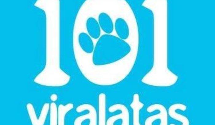Dívida dos Cães Resgatados e Internados