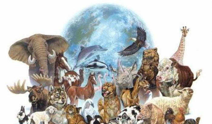 Fundação oficial do partido-movimento político Animais