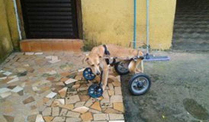 Animais resgatados e cuidados por Adriana Bondioli