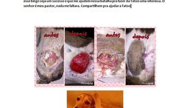 Bingo beneficente para ajudar animais em fase de tratamento