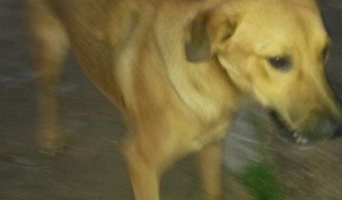 Bily está com Cinomose e precisa da sua ajuda