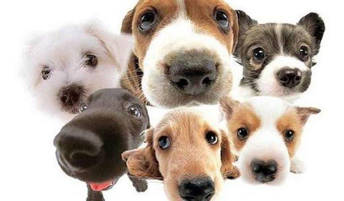 ONG para ajudar os animais