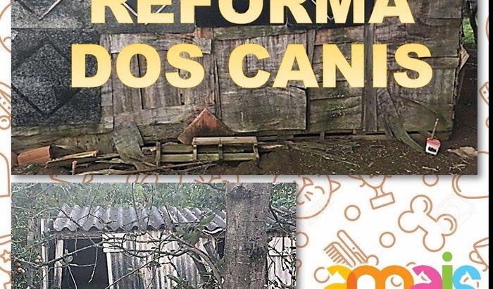 Reforma dos Canis da AMAIS
