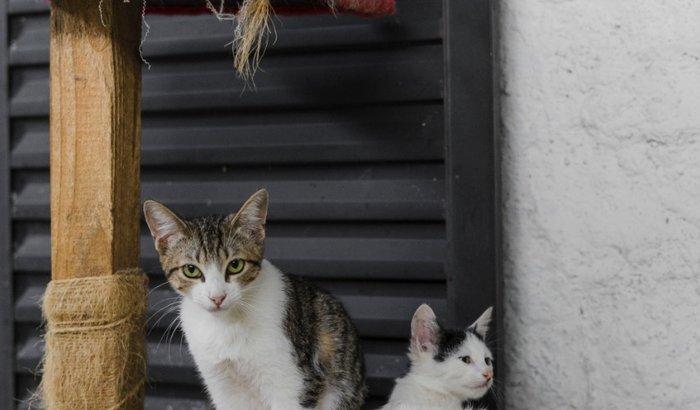 Páscoa dos gatinhos