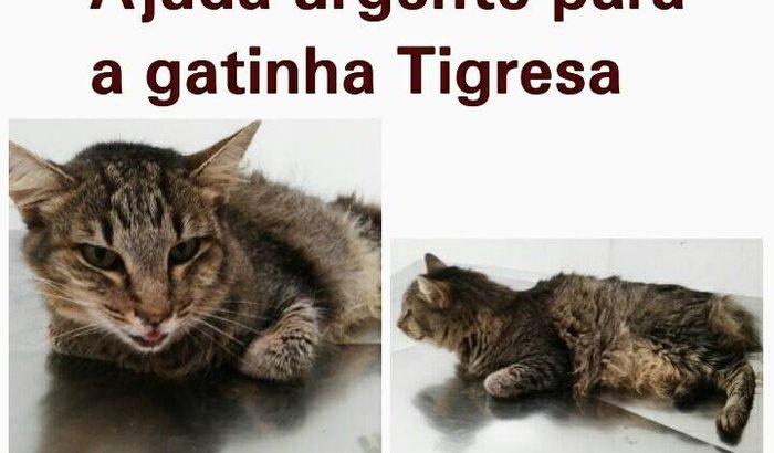 S.O.S ANIMAIS DA CASA DA DINDA