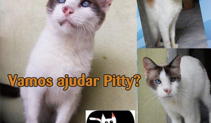 Tratamento de Câncer do Gato Pity