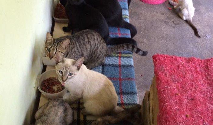 Ajuda pros gatinhos da Susana!