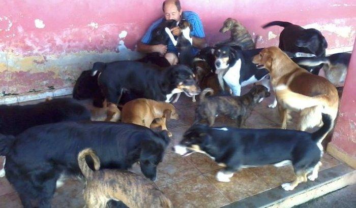 Ajude o Sr Antonio com seus 70 cães