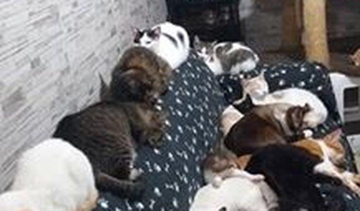 ração para 85 gatos - claudia lacomini