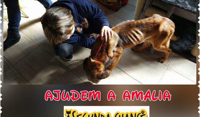 Ajudem Amalia