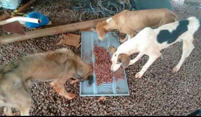 Abrigo para cães e gatos de rua! salvar vidas!