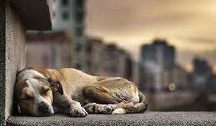 ajuda animais de rua