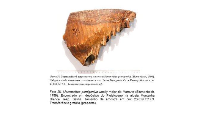Ajude ao Museu de História Natural da UFAL