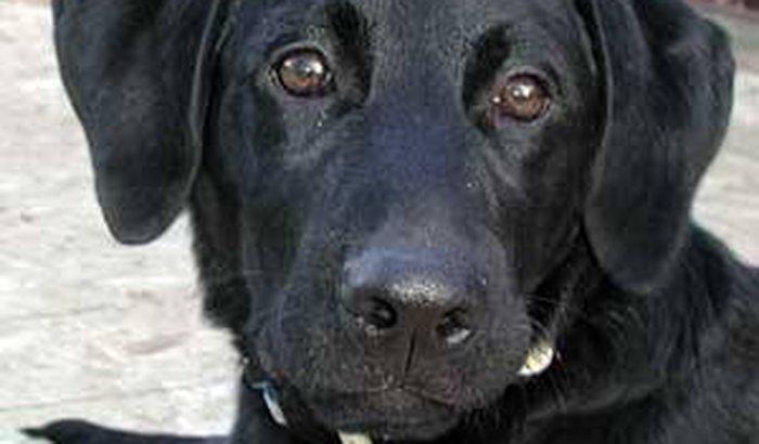Ajude uma cadelinha doente
