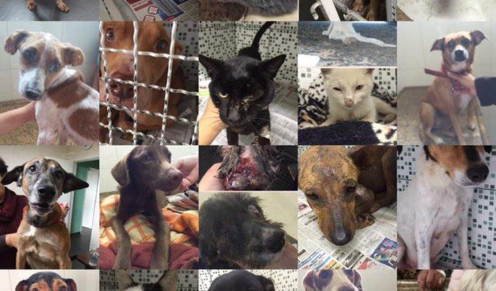 Ajuda para os animais carentes em tratamento