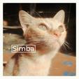 Thumb simba