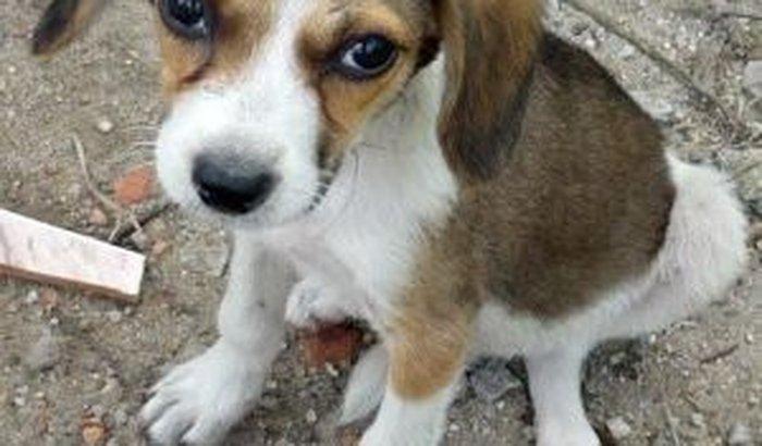 Resgate de animais maltratados