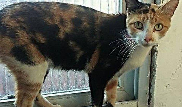 Ajudem a Gisele e os vários gatinhos carentes que ela cuida