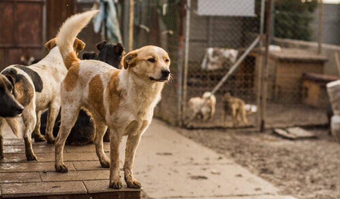 Campanha de alimentação e vacinação dos animais do abrigo!