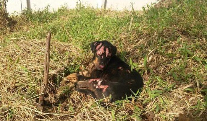 Protetor de animais atacado em incêndio em Gravataí