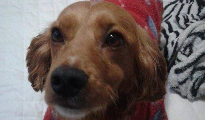 Ajuda para despesas veterinárias