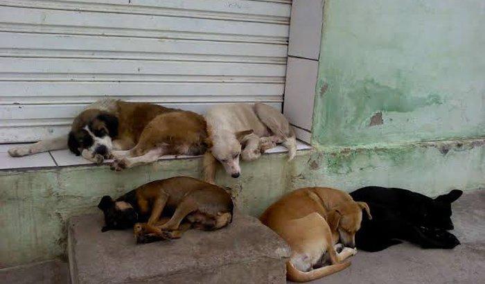 Vakinha solidária para ajudar a manter ONG de animais abandonado