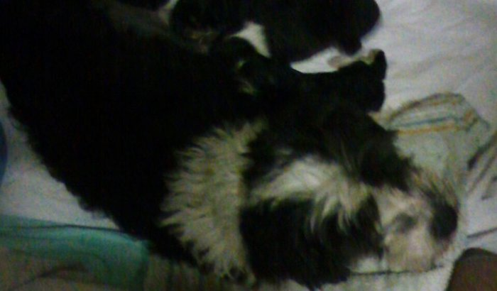 Maria Joaquina e bebês