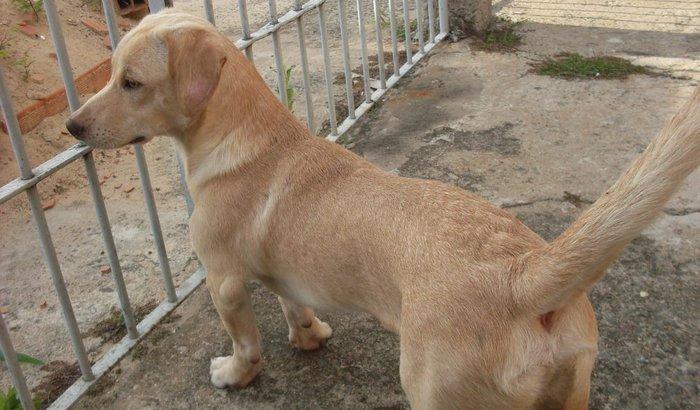Projeto Escolinha de Cachorro