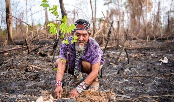 Ajude a Comunidade Huni Kuin Acre incendiada