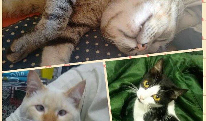 Castração - Três Gatinhos.