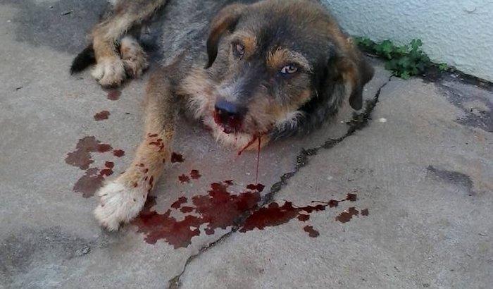 Ajuda nos tratamentos de animais carentes