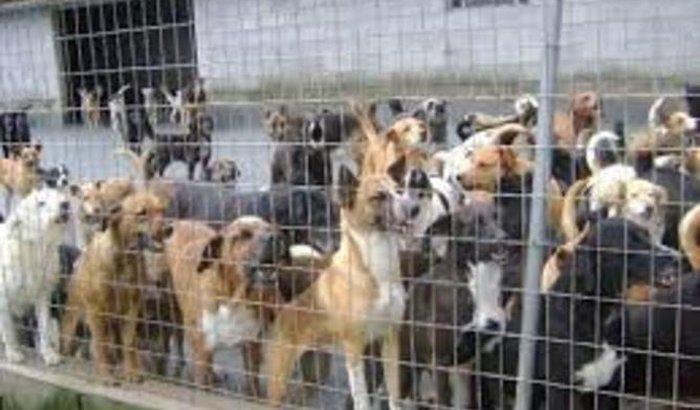Abrigo para cães de rua