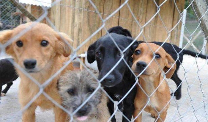 Ajude os animais do Sítio Dona Lúcia!