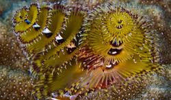 Estudo de biologia marinha