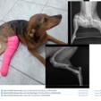 Thumb ajudem na cirurgia da aisha2