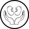 Thumb prote  o dos rins  cone m dico do vetor 7498463