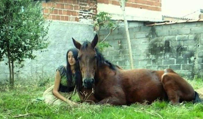 Ajude o Santuário de Cavalos a não fechar.