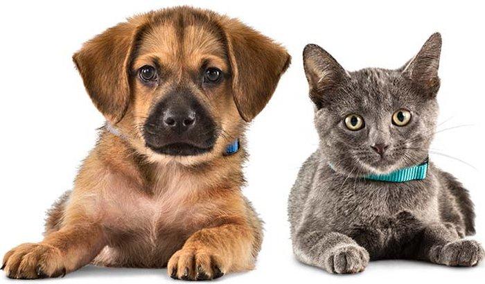 Pets Perdidos