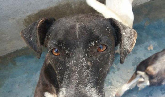 SOCORRO!!!!  Ajude-nos são 650 cães sem terem o que comer.