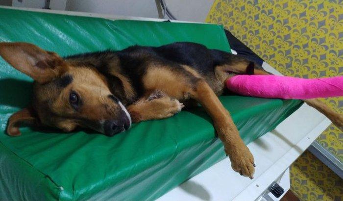 Ajuda para a cachorrinha Mônica
