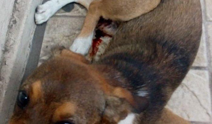 Ajude o Mathias - cão atropelado na estação Mathias velho