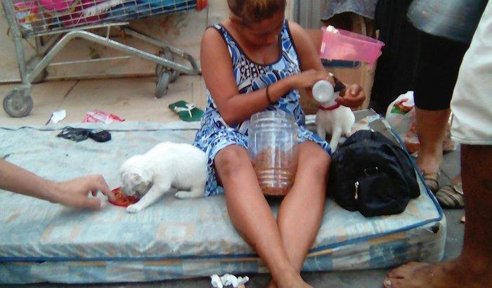 Ajudar Caroline e seus cachorrinhos a sair da rua