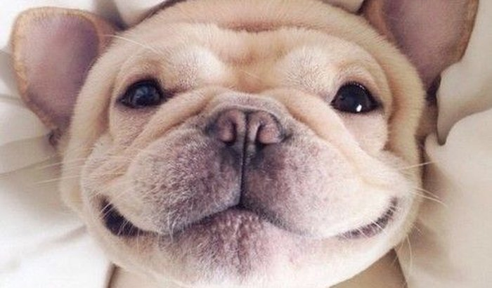 Vetz | Aplicativo de hospedagem grátis de pets