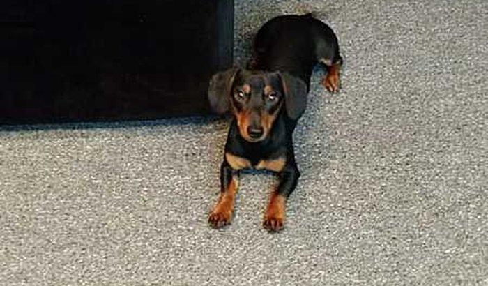 Fredico quer voltar a andar!