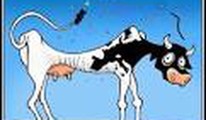 vaca magra