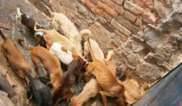 Ração para 20 cachorros de pequeno porte.