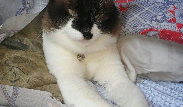 Salve um gatinho! Cirurgia, medicação e comida especial <3