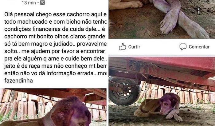 Ajuda Cachorrinho Abandonado