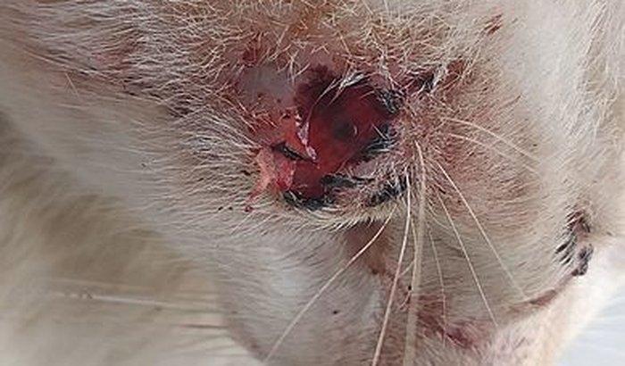 Ajude meu gato na castração  e medicamentos